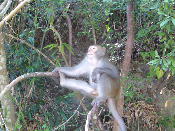 姿勢相當囂張的猴子