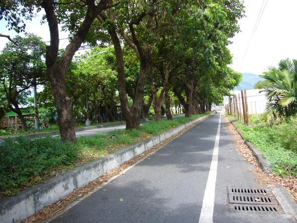 台東的綠蔭大道