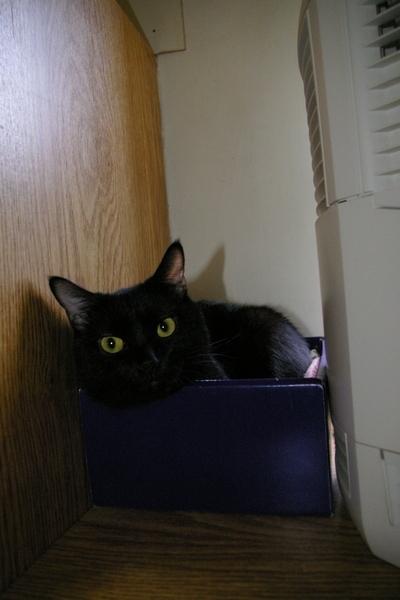 試拍-JJ的黑貓巧巧