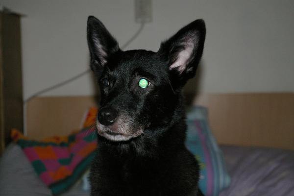 試拍-JJ家迷戀我的小黑狗可可