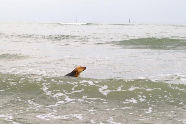 汪洋中的一條犬~尋母中