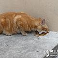 市區遇見小野貓
