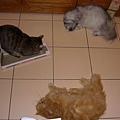 新的貓草粉摩爪板讓大家都瘋了