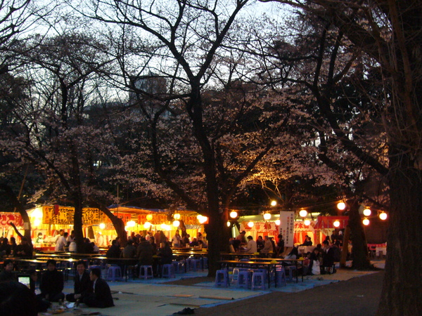 櫻花樹下都是一群群賞夜櫻的日本人