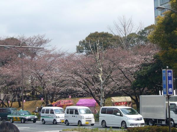 旁邊的小公園也有美麗的櫻花
