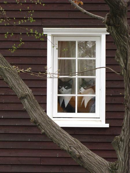 有貓的窗戶