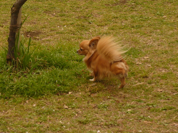 公園內上廁所踢踢的狗狗