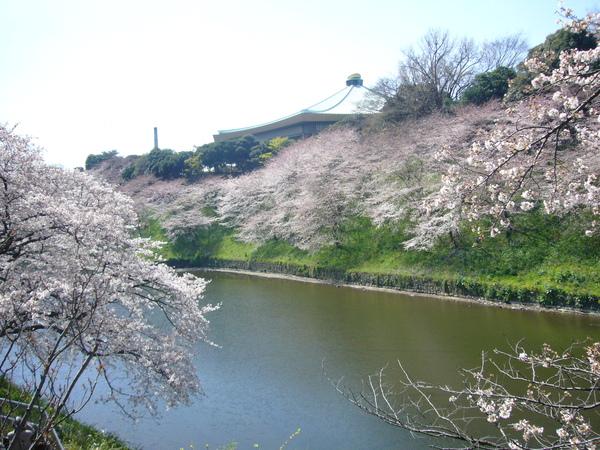 走著走著就看到一片美美的櫻花
