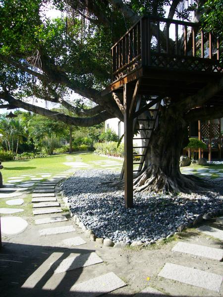 民宿後院的樹屋