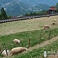 草原上都是棉羊