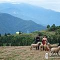 被羊群圍繞的新人