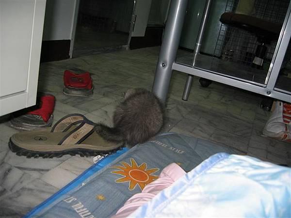 我是大老鼠呀~