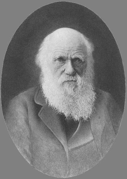 Jesus or Darwin.bmp