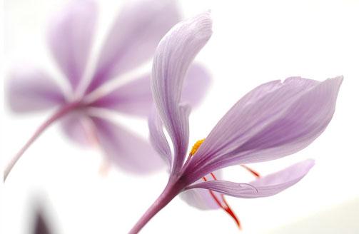Saffron(番紅花) 一種好比新鮮空氣穿過身體的味覺!.jpg