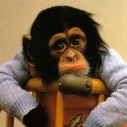 monkey1(findstuff22 )photobucket.jpg