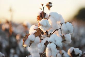 美元走貶刺激商品行情紛紛走高,紐約洲際交易所12月棉花期貨5日更上漲2.5%,創140年前開始交易以來新高。(彭博資訊).jpg