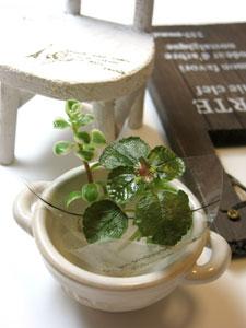 pot_plant_chair1_300