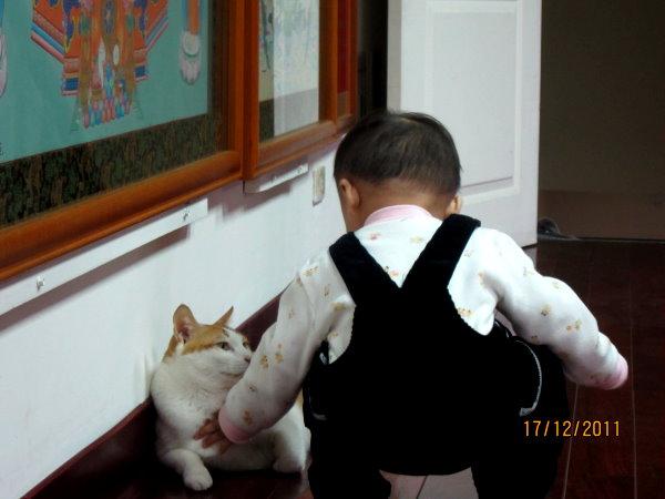 1217這是阿姨的貓咪