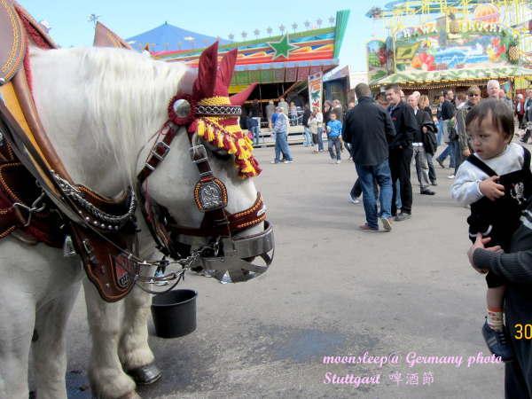 0930寶寶第一次看到馬