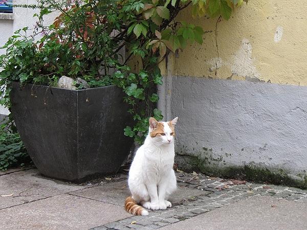 1011富森巷弄內的貓咪