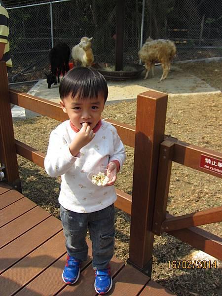 0216動物園看羊駝