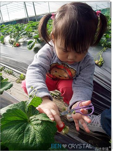 2Y6M 內湖採草莓