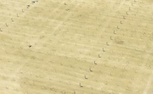 西班牙高塔電廠中密密麻麻的分布數百個高塔