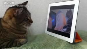Google人工智慧 成功學習辨識貓咪