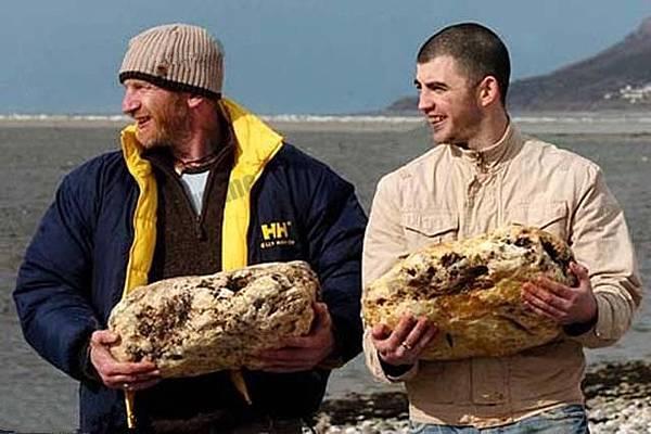 兩名英國威爾士男子日前在海邊遛狗時意外撿獲兩塊總重量約為50公斤的灰色石塊。讓他們喜出望外的是,科學檢驗表明,這些毫不起眼的灰色蠟狀物竟是名貴動物香料龍涎香,目前市場估價至少在55萬英鎊以上(折合台幣約2600萬).jpeg