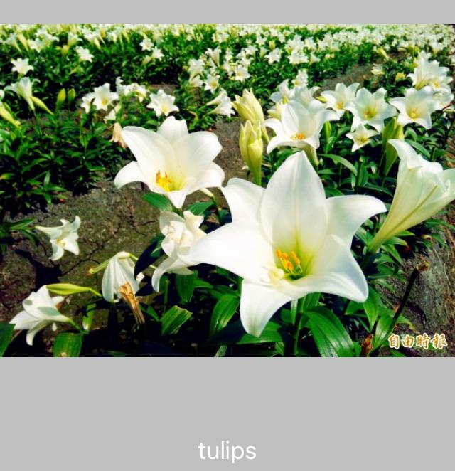 Simulator Screen Shot - iPhone 5s - 2018-06-24 at 22.41.27