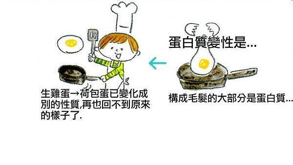蛋白質圖片.jpg
