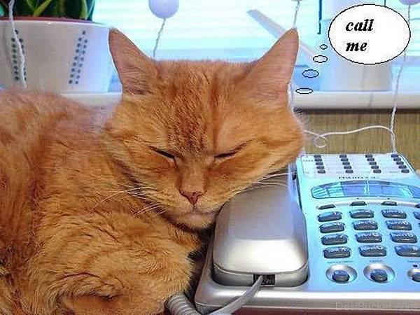 Cat-Call-me-graphic-Callme1430.jpg