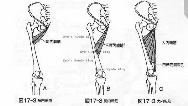 大腿內側肌肉