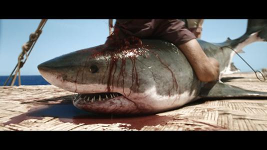kontiki-shark1_534x300