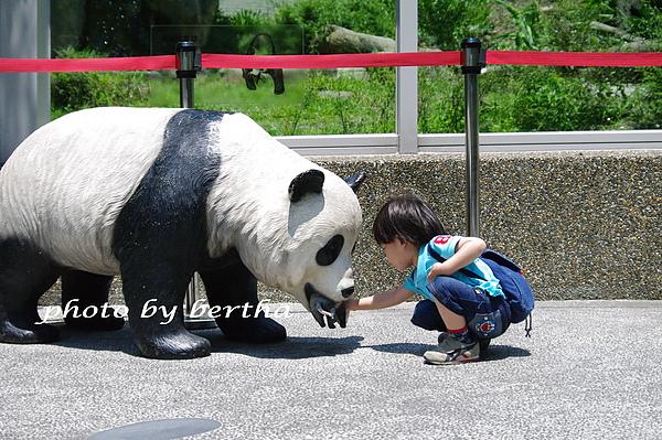 6月8日動物園 一豆-10.jpg