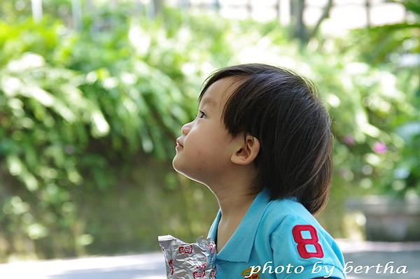 6月8日動物園 一豆-4.jpg