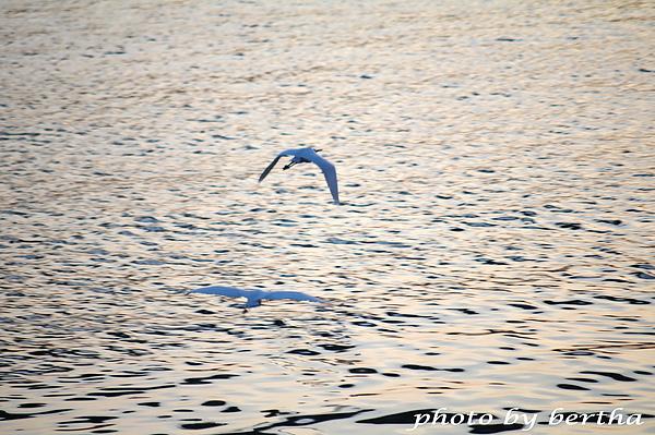 海上的海鷗.jpg