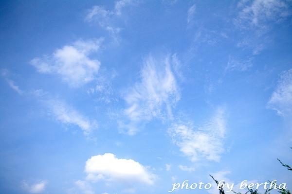 葡萄樹莊園之天空藍.jpg