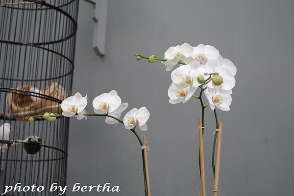 涵碧樓大廳前的蘭花.jpg