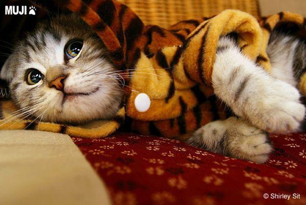 貓咪圖/Cat005