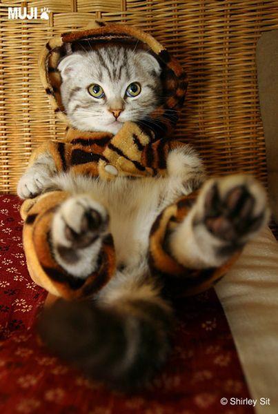 貓咪圖/Cat004