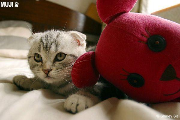 貓咪圖/Cat003