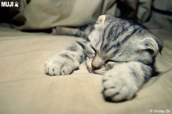 貓咪圖/Cat007