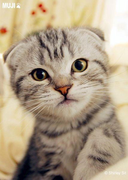 貓咪圖/Cat010