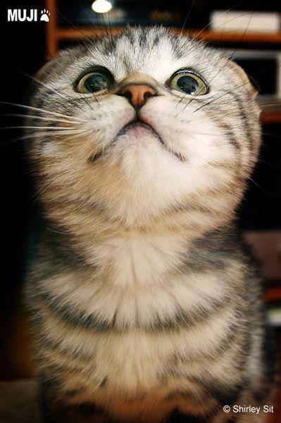 貓咪圖/Cat011