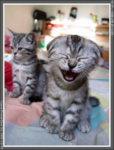 貓咪圖/Cat013