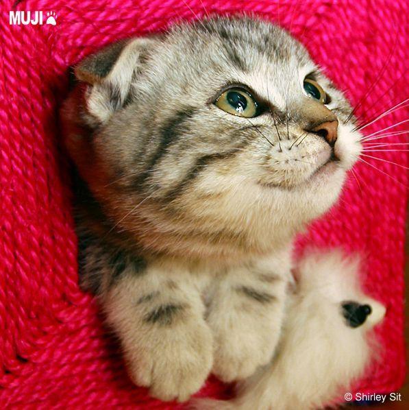 貓咪圖/Cat012