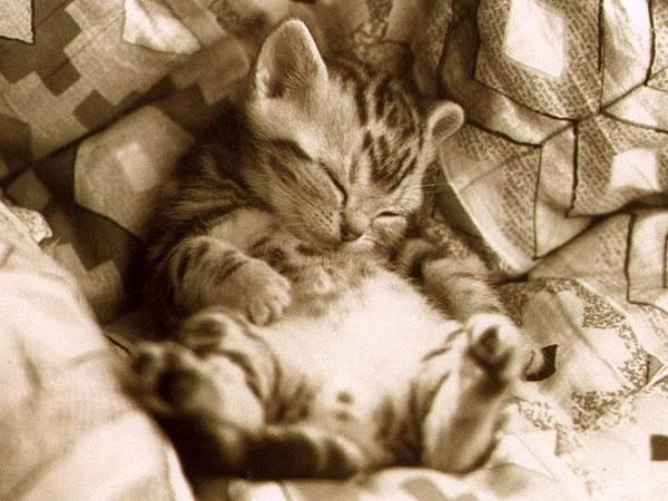 貓咪圖/Cat014