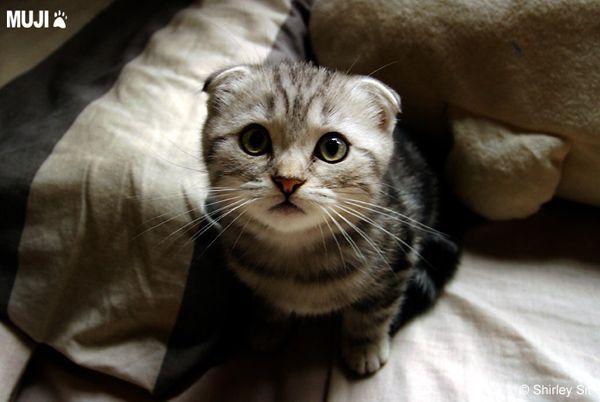 貓咪圖/Cat001