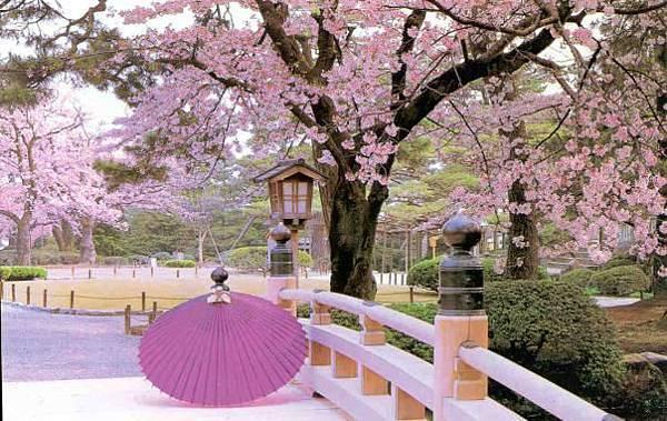 世界美景/日本的櫻花
